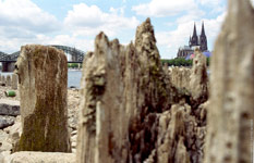 climate drought  rhine river Koeln